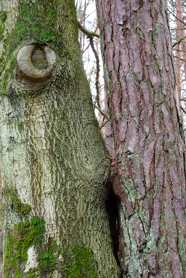 Gesichter im Darss Wald