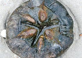 Sternenfische
